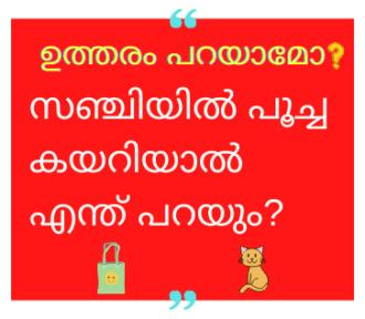 സഞ്ചിയിൽ പൂച്ച കയറിയാൽ എന്ത് പറയും? | with Answer
